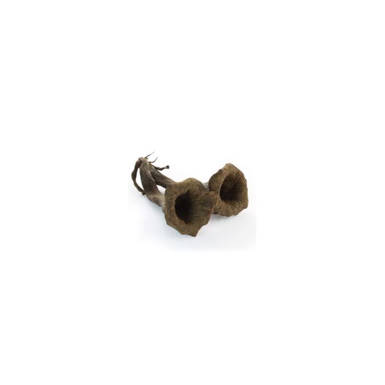 champignons trompettes de la mort