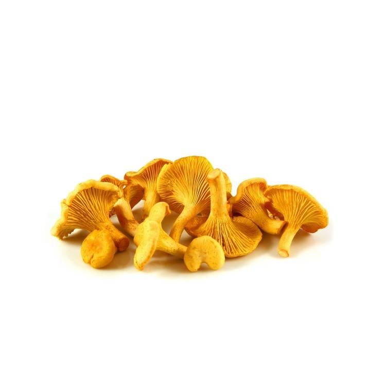 champignons Girolles
